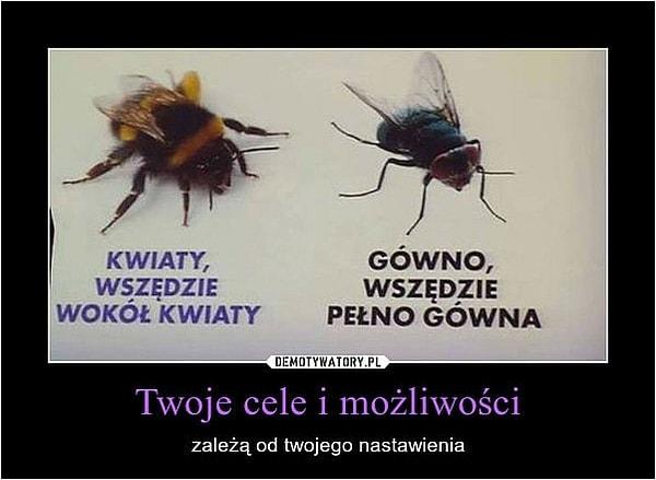 memy pszczoła