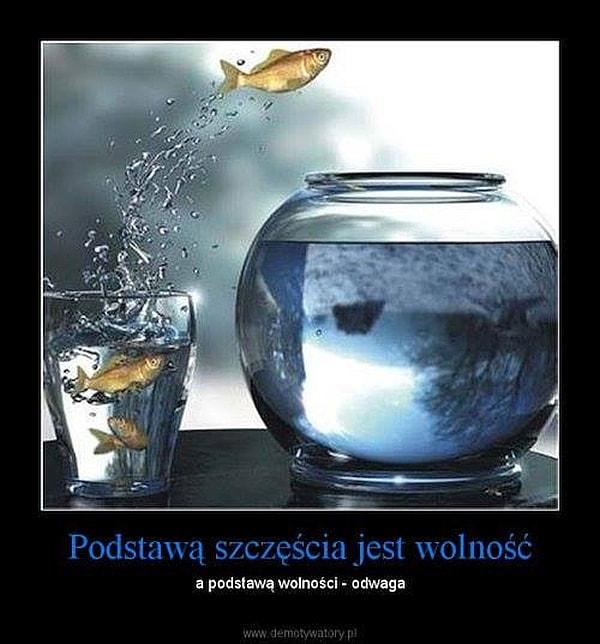 memy ryba